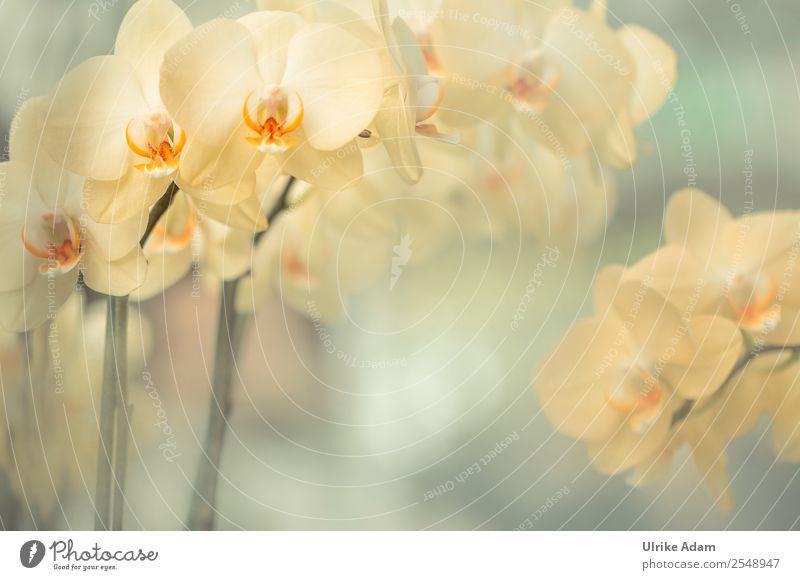 Gelbe Orchideen - Blumen Stil Design schön Wellness Leben harmonisch Wohlgefühl Zufriedenheit Erholung ruhig Meditation Kur Spa Massage Feste & Feiern