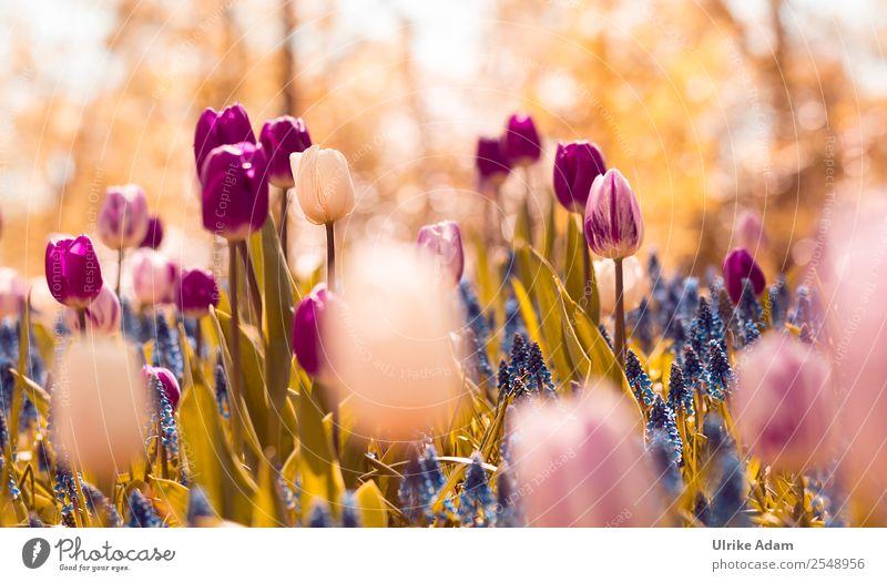 Frühlingszauber Natur Pflanze blau Blume Erholung Blatt ruhig Innenarchitektur Blüte Garten rosa Design Zufriedenheit Dekoration & Verzierung Park