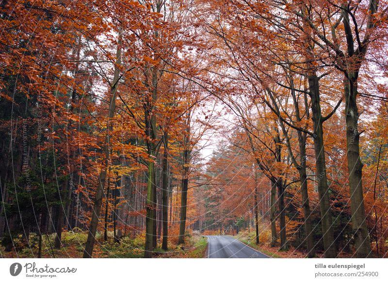 adé Natur Baum Blatt Einsamkeit Wald Straße Herbst kalt orange verblüht herbstlich Landstraße bewachsen