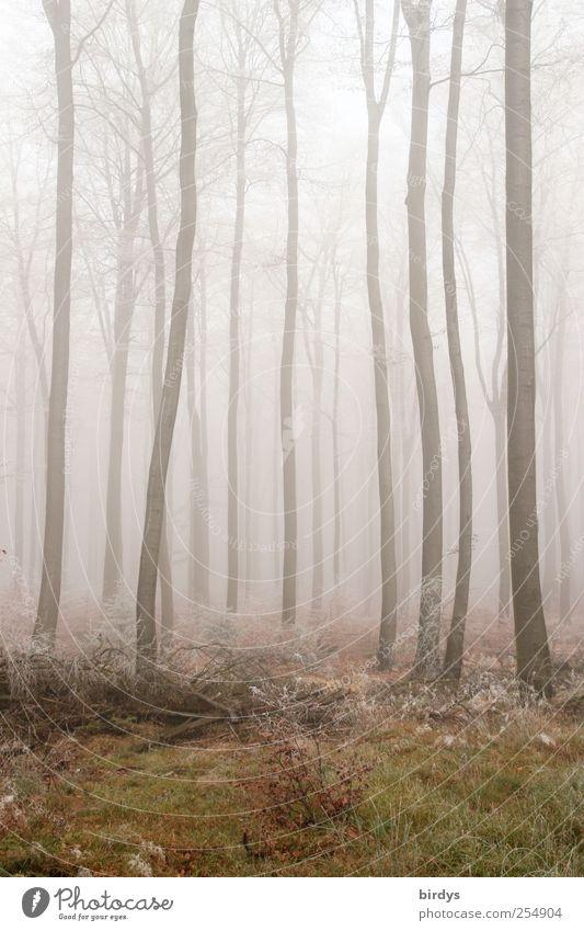 Kurvenreich Natur Pflanze Einsamkeit Wald Herbst Wetter Nebel außergewöhnlich Wandel & Veränderung viele gruselig fantastisch Baumstamm Surrealismus kahl krumm