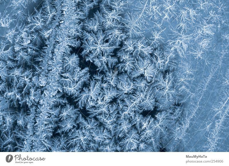 Natur Wasser Winter Schnee Herbst Blüte träumen PKW Eis Park Kraft elegant Verkehr Klima gefährlich Wassertropfen