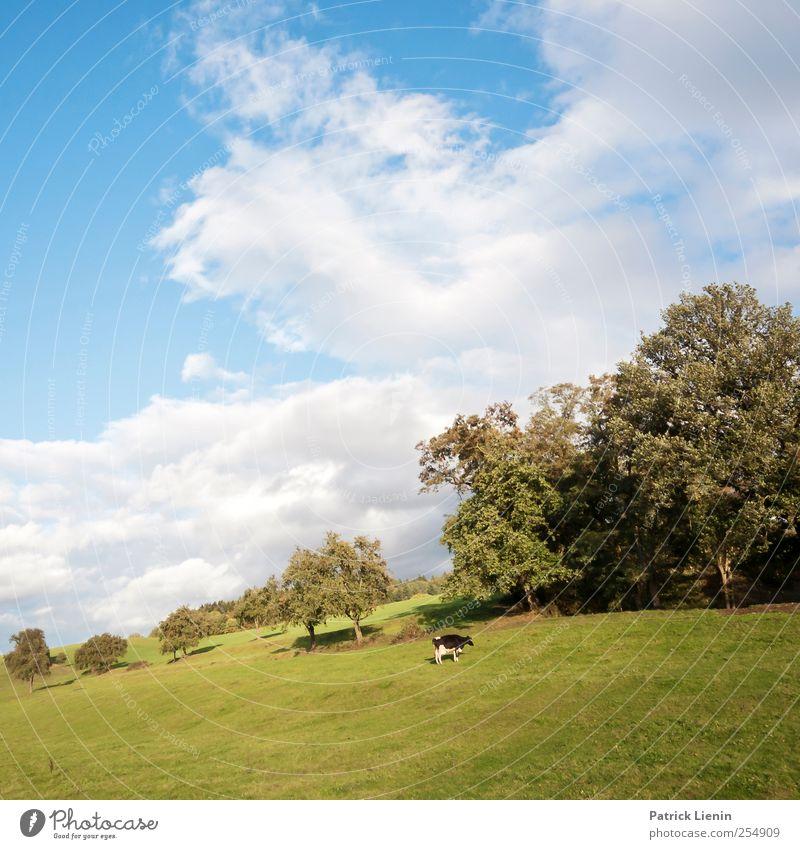 Allein auf weiter Flur Umwelt Natur Landschaft Pflanze Luft Himmel Wolken Klima Klimawandel Wetter Schönes Wetter Baum Wiese Feld Hügel Berge u. Gebirge Tier