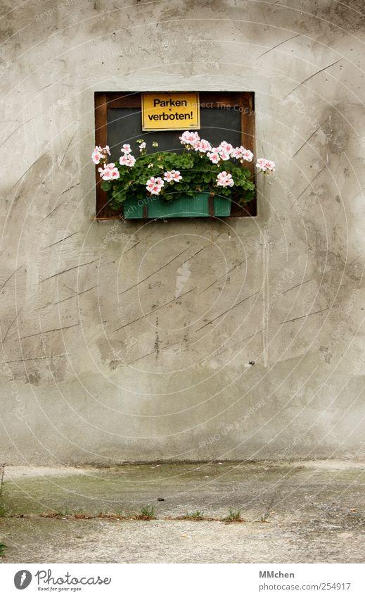 Grauzone Haus Platz Gebäude Mauer Wand Fassade Verkehrswege Dekoration & Verzierung Schilder & Markierungen Hinweisschild Warnschild grau grün rosa
