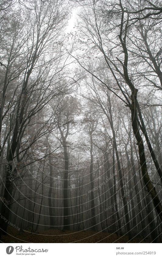 Novemberwald Umwelt Natur Himmel Herbst Wetter Nebel Eis Frost Baum Baumstamm Wald Blatt Laubwald Herbstlaub Herbstlandschaft Fußweg wandern dunkel