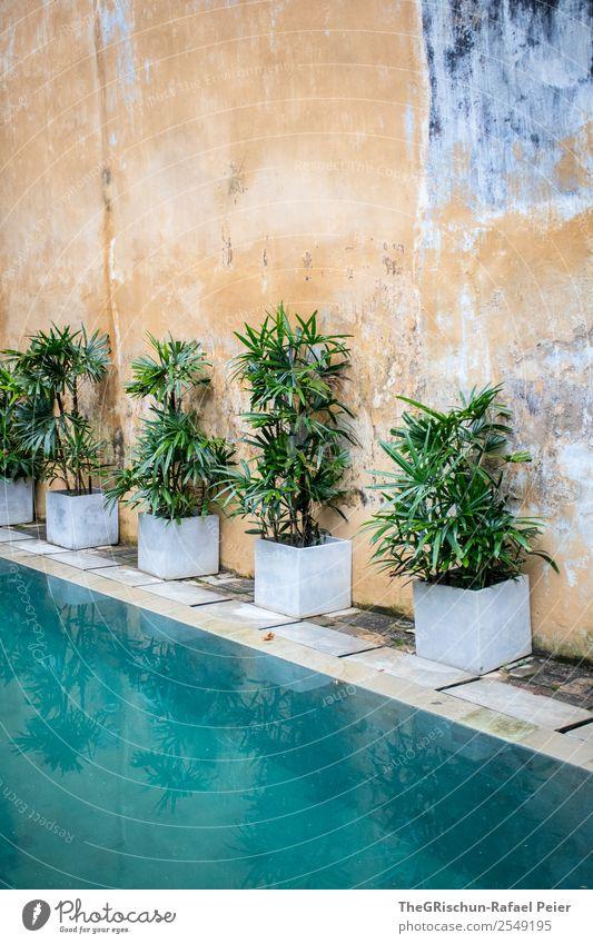 Pflanzen am Pool grün Wasser weiß Hintergrundbild Wand Mauer Schwimmbad türkis