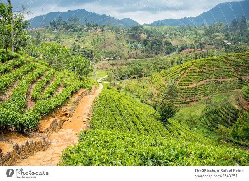 Teeplantage Natur Landschaft braun grün schwarz hatton Sri Lanka Feld Hügel Idylle Farbfoto Außenaufnahme Tag Panorama (Aussicht) Weitwinkel
