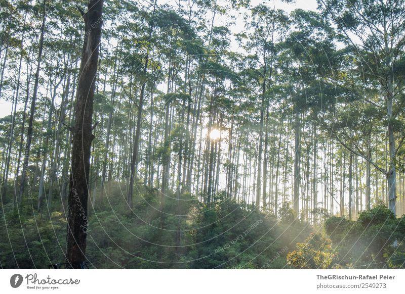 Wald-Stimmung Natur grün weiß Baum Licht Schatten Sonnenlicht Sonnenstrahlen Sri Lanka Dunst Farbfoto Außenaufnahme Menschenleer Morgen Morgendämmerung