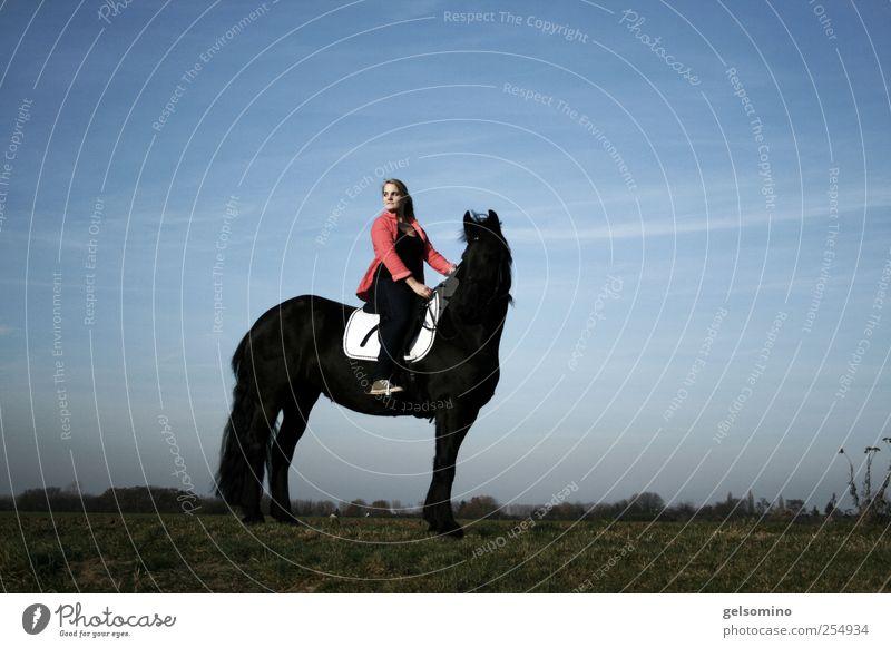 Gute Aussichten Mensch Himmel Jugendliche blau rot schwarz feminin Feld blond elegant sitzen frei groß ästhetisch stehen Pferd
