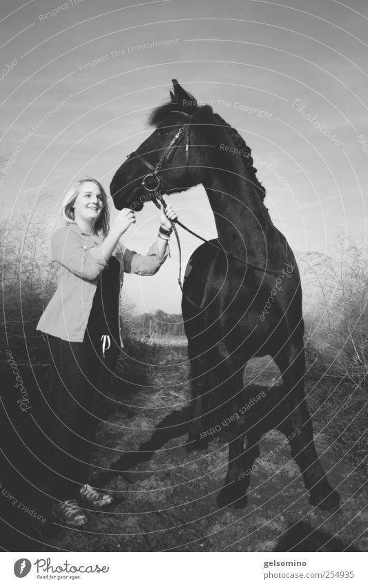 Gut festhalten Reiten feminin Junge Frau Jugendliche 1 Mensch Schönes Wetter Feld Pferd beobachten berühren entdecken stehen ästhetisch elegant Zusammensein