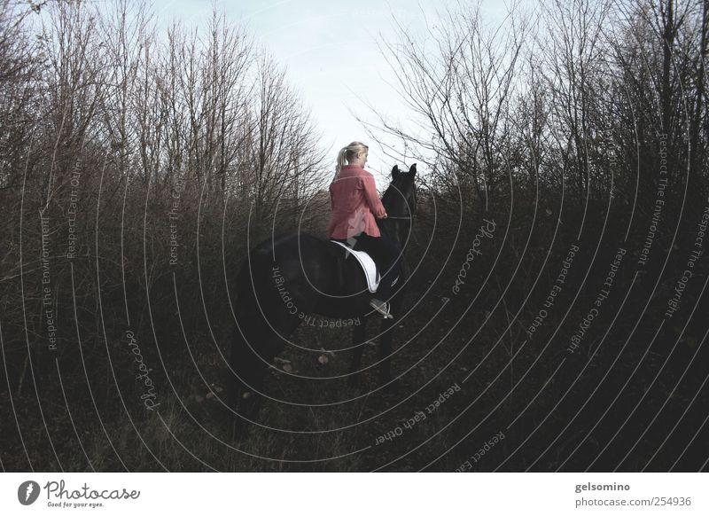 ab durch die hecke Mensch Jugendliche rot Ferne Wald dunkel grau Zusammensein elegant sitzen warten stehen Pferd beobachten Junge Frau Reiten