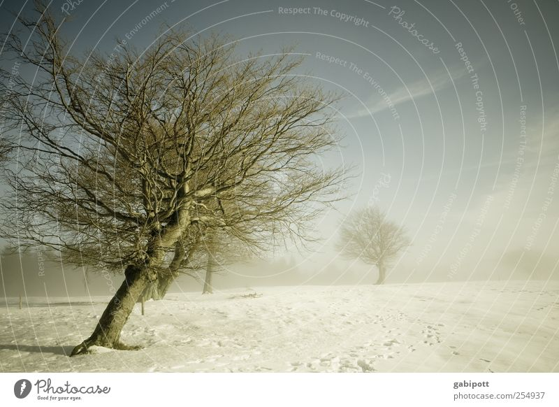 windschief Himmel Natur blau weiß Baum Winter kalt Schnee Umwelt Landschaft grau Wege & Pfade Wetter Feld Eis Freizeit & Hobby
