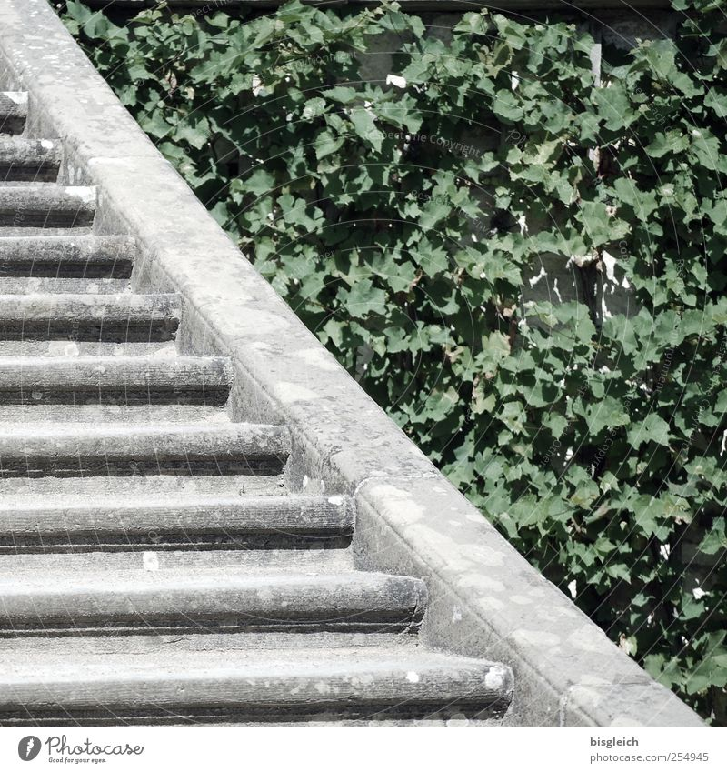 Gegensatz grün Pflanze Blatt grau Garten Stein Park Beton Treppe Wachstum Wandel & Veränderung Gegenteil Grünpflanze Fortschritt