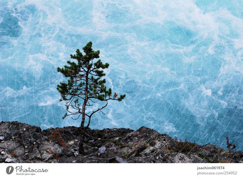 Baum vor Wasserwand Natur blau Sommer schwarz grau Stein Wellen nass Felsen wild Sträucher Urelemente Flussufer Schlucht Bach