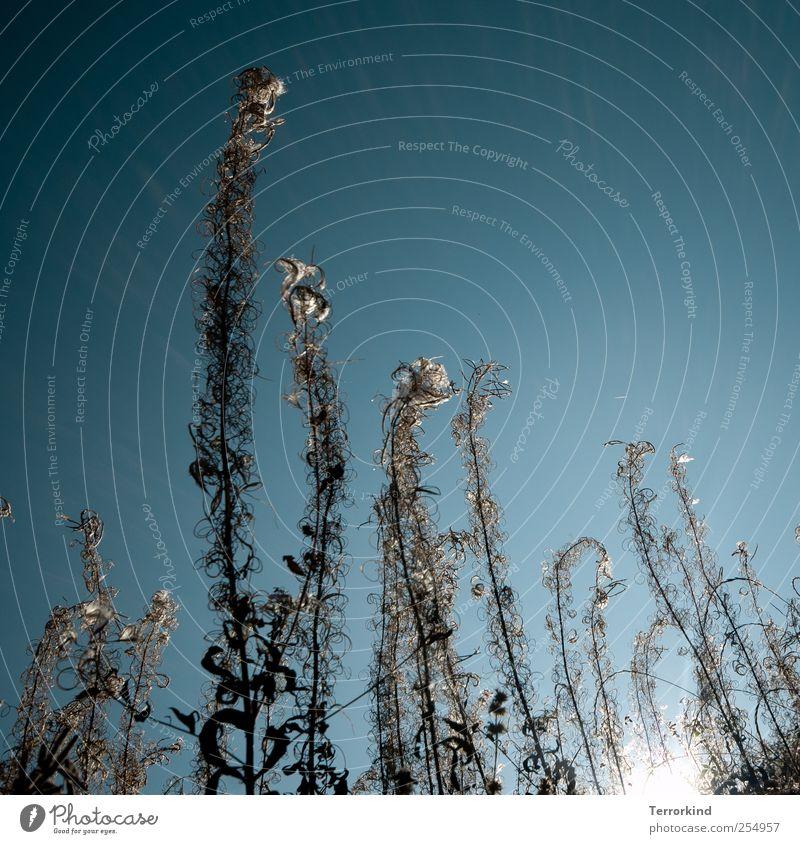 Chamansülz | gegen.wind Himmel Natur blau Pflanze Ferne hoch groß Perspektive türkis durcheinander Spirale Ameise Wolkenloser Himmel Verhext spielend