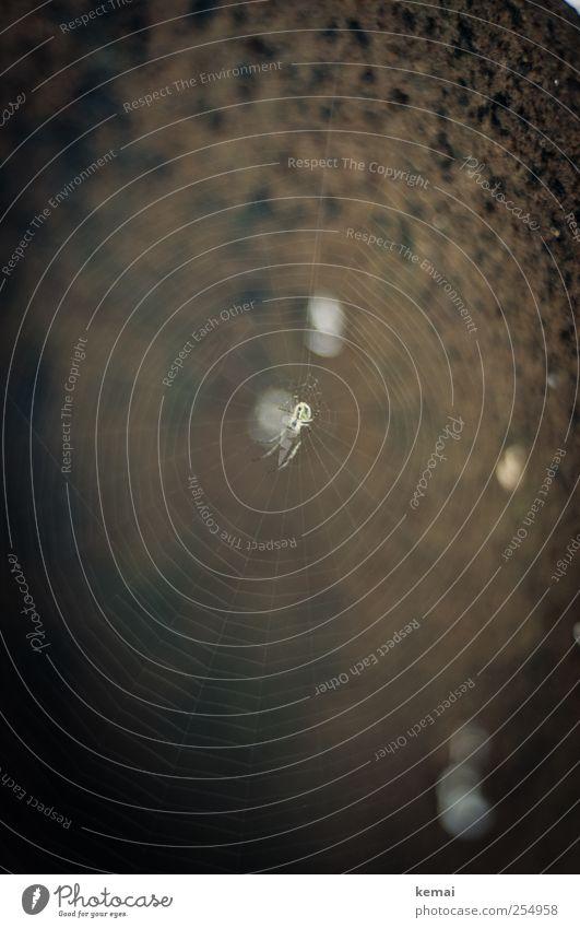 [CHAMANSÜLZ 2011] Spinne im Netz Natur Tier Wildtier Fass Metall sitzen dunkel braun schwarz Spinnennetz Farbfoto Gedeckte Farben Außenaufnahme Nahaufnahme
