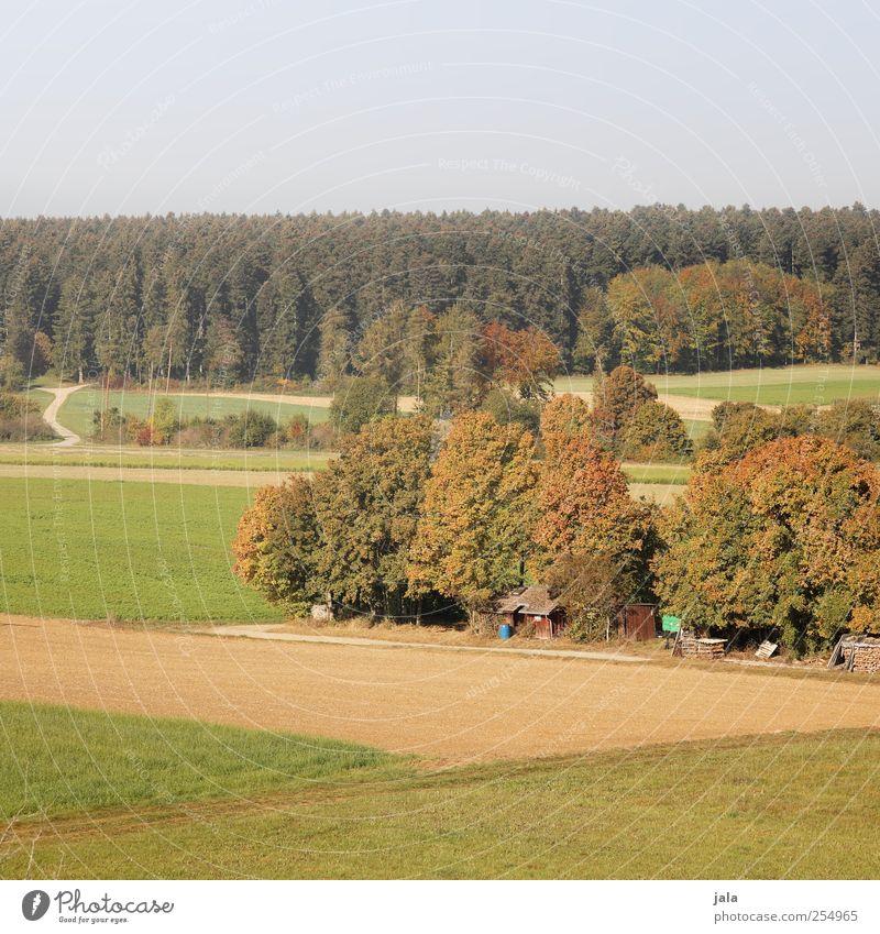 CHAMANSÜLZ | ländle Himmel Natur Baum Pflanze Wald Herbst Umwelt Landschaft Feld natürlich