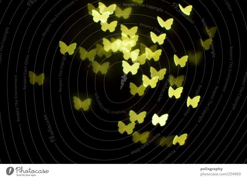 Nachtschwärmer Nachtleben Feste & Feiern Tier Schmetterling Tiergruppe Schwarm Tierfamilie fliegen leuchten Zusammensein gelb grün Glück Lebensfreude