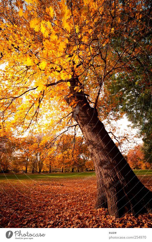 Wunschbaum Himmel Natur schön Baum gelb Herbst Wiese Umwelt Landschaft Park Wetter gold Klima Schönes Wetter Baumkrone Herbstlaub