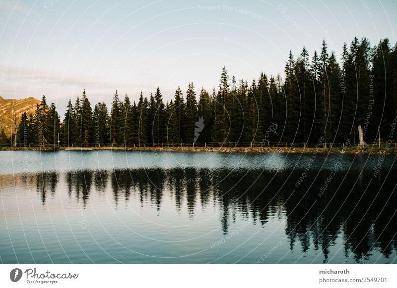 Reflektion der Bäume Ausflug Freiheit wandern Feierabend Umwelt Natur Landschaft Pflanze Tier Wasser Himmel Sonnenaufgang Sonnenuntergang Klima Klimawandel