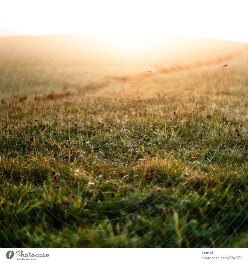 Morgenlicht Natur grün schön Pflanze Sonne Blume gelb Herbst Wiese Leben Umwelt Landschaft Gras Blüte hell nass