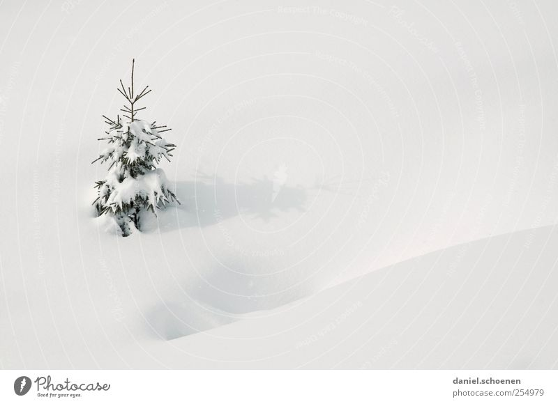 Weihnachtskarte - outdoor Ferien & Urlaub & Reisen Winter Schnee Winterurlaub Natur Klima Wetter Eis Frost Baum hell weiß Tanne klein Textfreiraum rechts