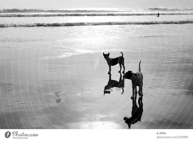 Stray II Natur Wasser Hund Ferien & Urlaub & Reisen Meer Sommer Strand Tier Ferne Sand Küste Tierjunges Wellen nass warten beobachten