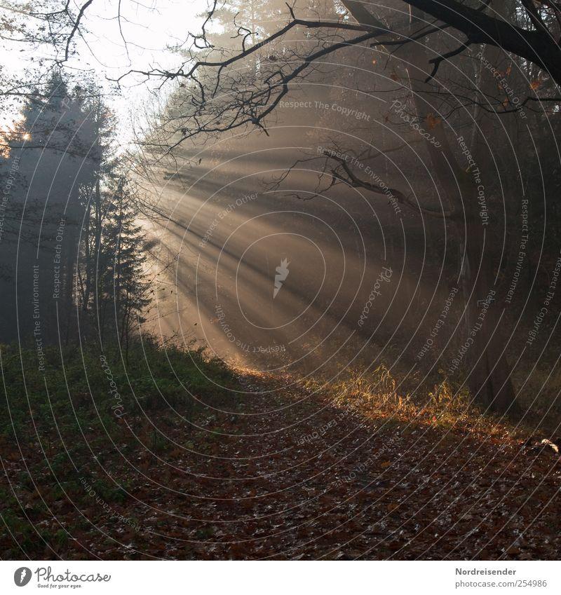Energie Natur Pflanze Sonne ruhig Wald Erholung Herbst Leben Landschaft Stimmung Wetter Beleuchtung wandern Energie Hoffnung leuchten