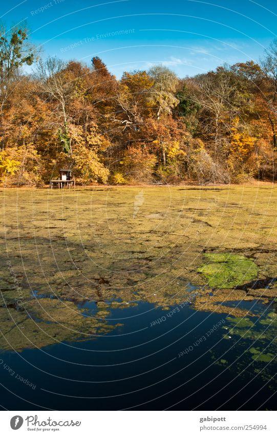 der große farbtopf Himmel Natur Wasser blau schön Baum Pflanze Ferien & Urlaub & Reisen Einsamkeit Farbe Wald Erholung Herbst Umwelt Landschaft Küste