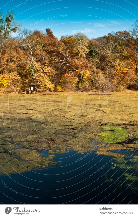 der große farbtopf Umwelt Natur Landschaft Pflanze Wasser Himmel Herbst Schönes Wetter Baum Küste See Erholung natürlich schön blau braun mehrfarbig