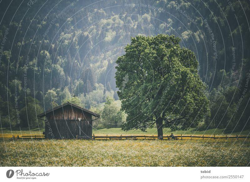 Frühlingswiese Mensch Natur Pflanze Landschaft Sonne Baum Blume Wald Ferne Wege & Pfade Wiese Gras Freiheit Zufriedenheit Freizeit & Hobby