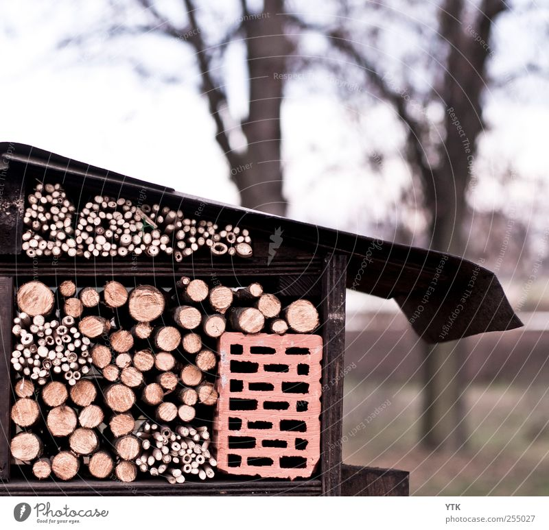 selbstgebaute Vogelherberge Himmel Natur Baum Pflanze Winter kalt Umwelt Landschaft Vogel fliegen Klima Sicherheit Dach Ast Schutz Kreativität