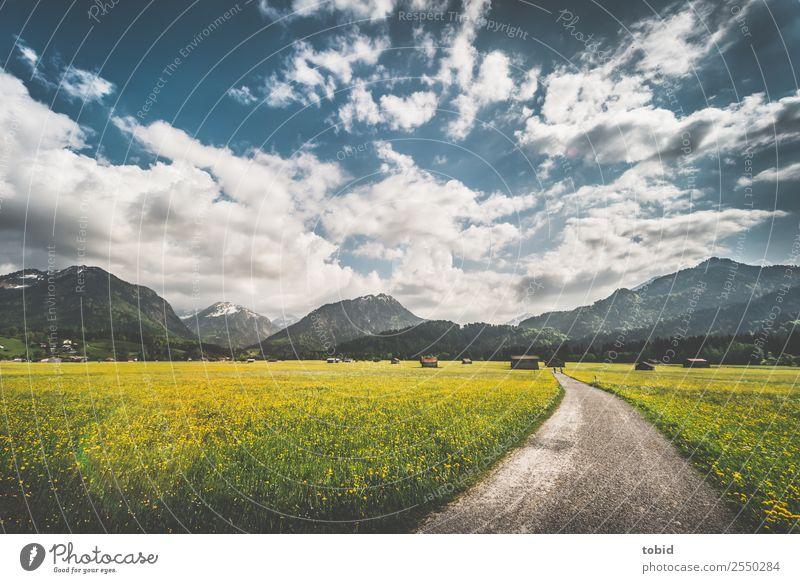 Blumenwiese im Allgäu Himmel Natur Ferien & Urlaub & Reisen Sommer Pflanze Landschaft Wolken Einsamkeit Ferne Berge u. Gebirge Frühling Wege & Pfade Wiese Gras