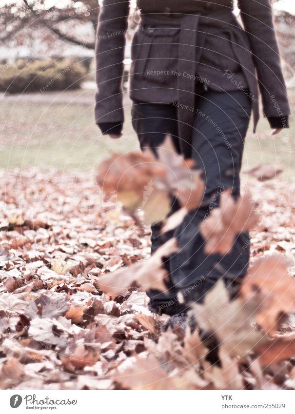 Wie Kinder II Mensch Natur Jugendliche Baum Pflanze Freude Blatt Erwachsene Herbst Wiese Umwelt Spielen Beine Park Fuß lustig