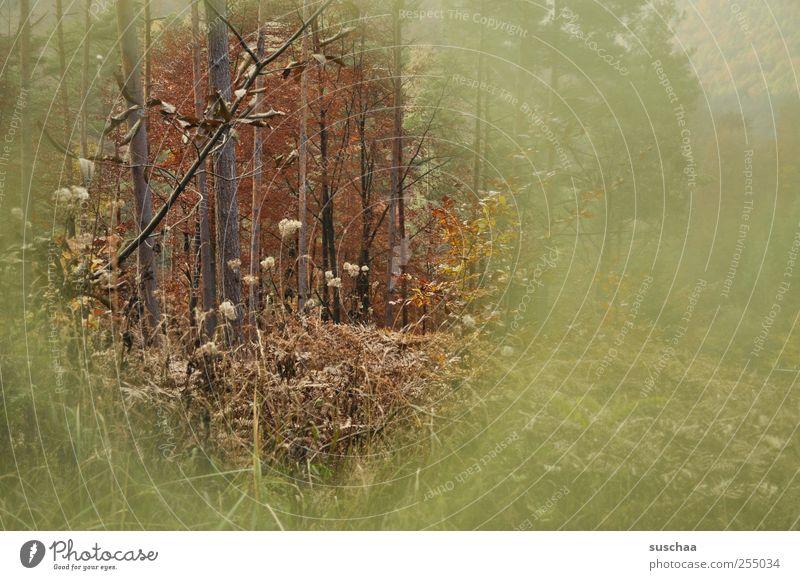 Pfälzer Wald Natur grün Baum Wald Herbst Umwelt Landschaft Holz braun Klima Sträucher retro rund Idylle Loch herbstlich