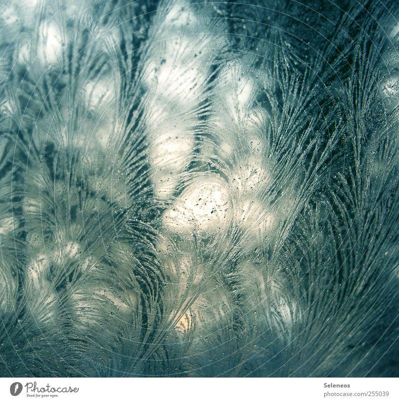 Eisblume Winter Umwelt Natur Landschaft Frost Glas Linie frieren kalt nah Eisblumen Farbfoto Nahaufnahme Detailaufnahme Makroaufnahme abstrakt Muster