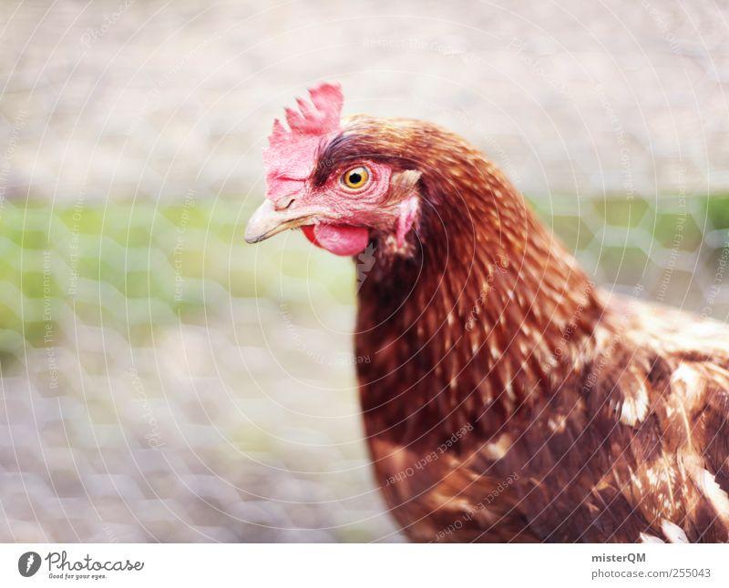Dorfglucke. Tier Auge Glück Vogel ästhetisch Flügel Feder Tiergesicht Bauernhof Zaun lecker dumm Haustier Gitter ökologisch gefangen