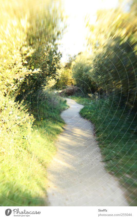 einfach joggen Natur Sonne Blatt Gras Bewegung Wege & Pfade laufen Schönes Wetter Geschwindigkeit Sträucher Ziel Fußweg Eile Dynamik Oktober Joggen
