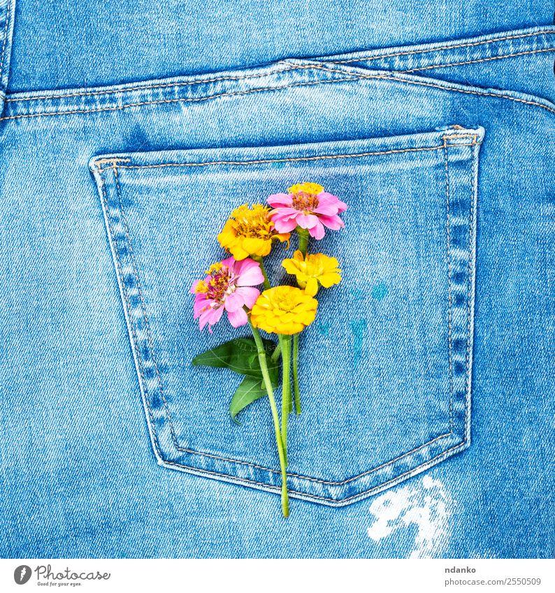 Blumen an der Gesäßtasche Stil Mode Bekleidung Jeanshose Stoff Blühend blau gelb Farbe Tradition Jeansstoff Tasche Rücken Konsistenz Hintergrund lässig Textil