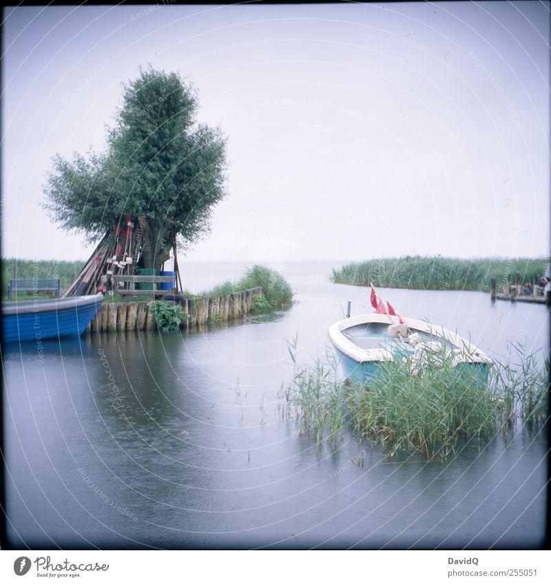 Achterwasser Umwelt Natur Landschaft Horizont Wetter schlechtes Wetter Regen Baum Schilfrohr Küste Bucht Ostsee Fischerboot Hafen nass Idylle Mobilität