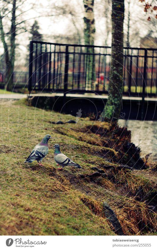 Hey George... Wasser Tier Gras Zusammensein Brücke Moos Taube Bach schlechtes Wetter