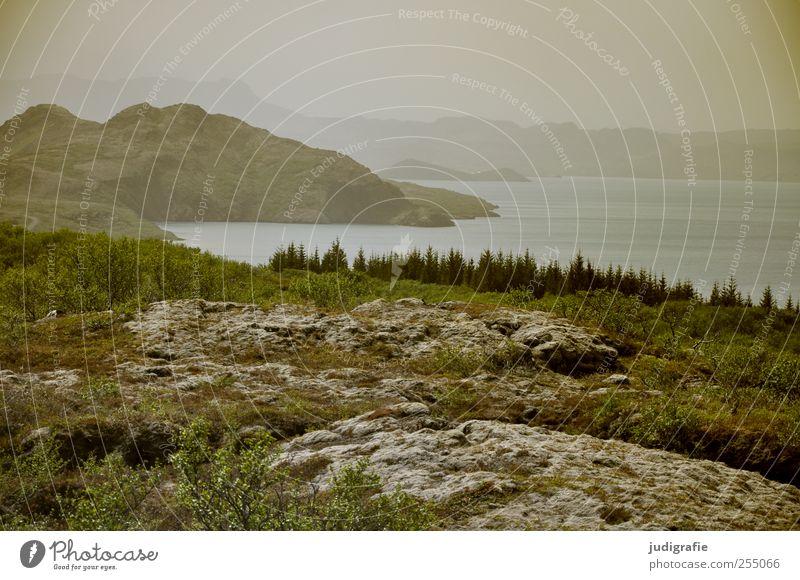 Island Umwelt Natur Landschaft Tier Wasser Klima Hügel Felsen Berge u. Gebirge Seeufer Þingvallavatn natürlich wild Stimmung Farbfoto Außenaufnahme Menschenleer