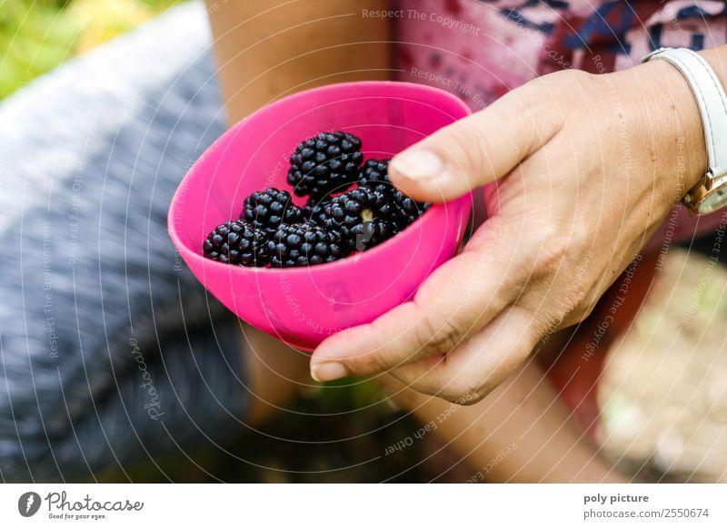 Schüssel mit frisch geernteten Brombeeren Gesunde Ernährung Freizeit & Hobby Sommerurlaub Junge Frau Jugendliche Erwachsene Leben Hand 13-18 Jahre 18-30 Jahre