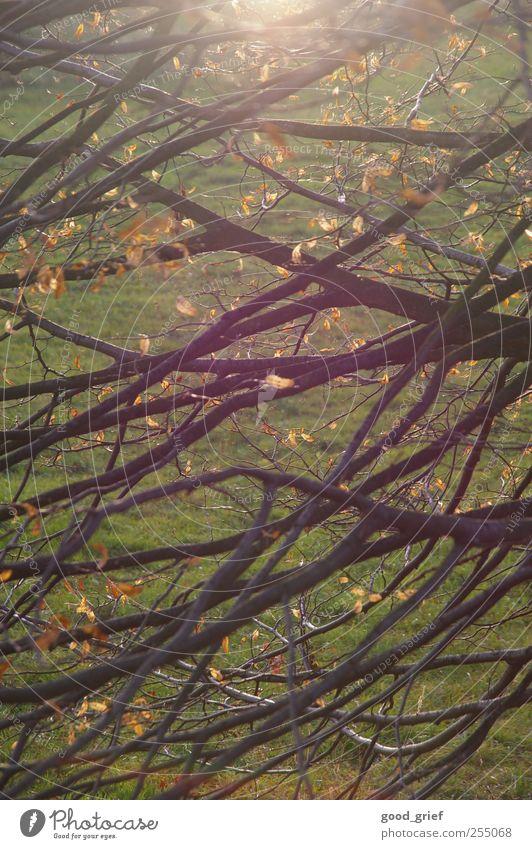 golden fall Natur alt grün Baum Pflanze Sonne Blatt Tier Herbst Umwelt Landschaft Stimmung braun Klima Urelemente Schönes Wetter