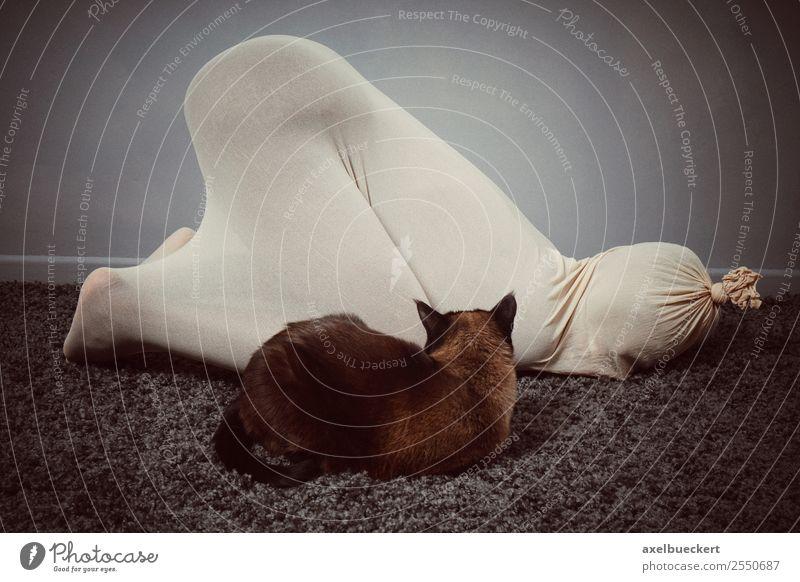 Katzen unter sich Lifestyle Freude Freizeit & Hobby Spielen Raum Mensch Frau Erwachsene 1 Tier Haustier außergewöhnlich lustig verrückt bizarr verkleidet