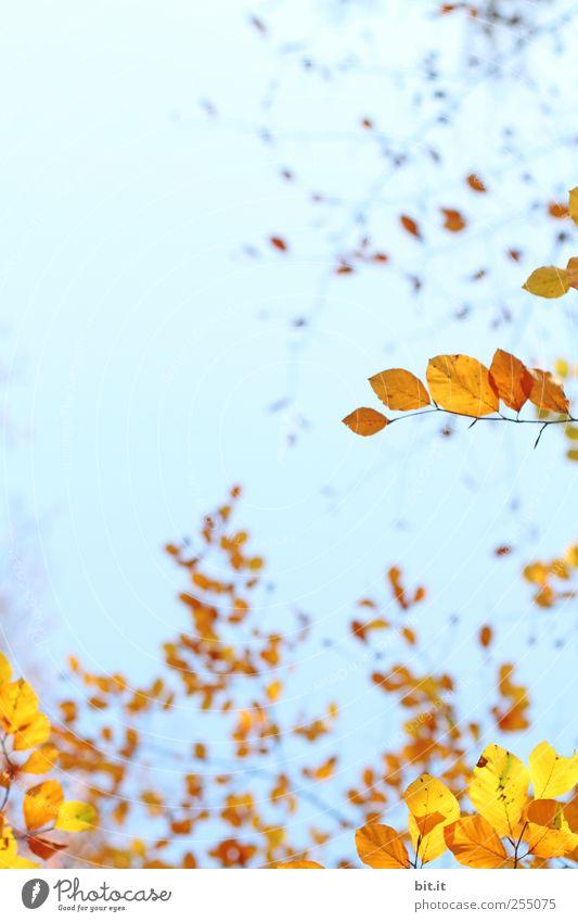 schwungvoll durch den Herbst Himmel Pflanze Erholung ruhig gelb Garten braun Park Zufriedenheit leuchten Sträucher Dekoration & Verzierung Schönes Wetter