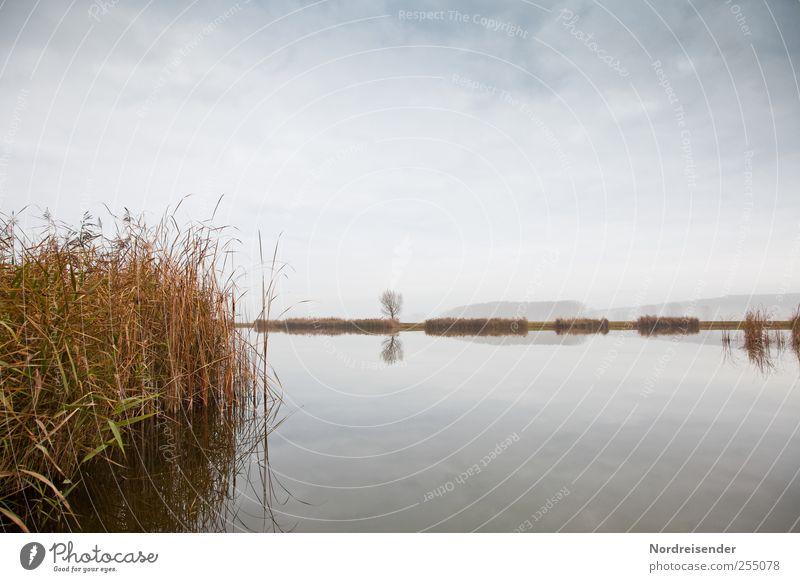 Herbst am See Himmel Natur Wasser Pflanze Wolken ruhig Ferne Erholung Landschaft natürlich Vergänglichkeit Schilfrohr Meditation November Herbstfärbung