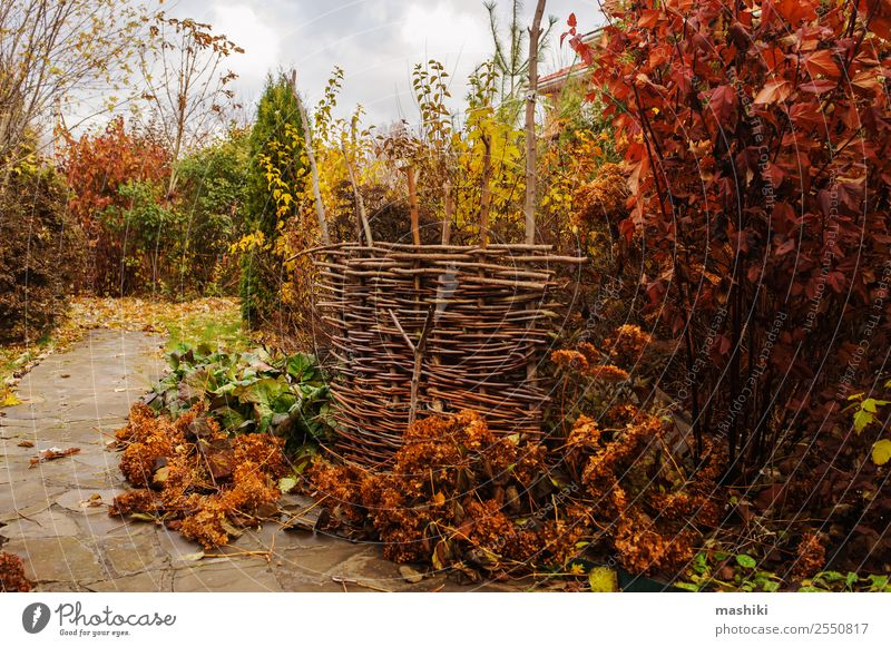 Spaziergang im Novembergarten Freizeit & Hobby Garten Natur Landschaft Wolken Herbst Sträucher Blatt Stein braun Farbe Oktober fallen Jahreszeiten marmorieren