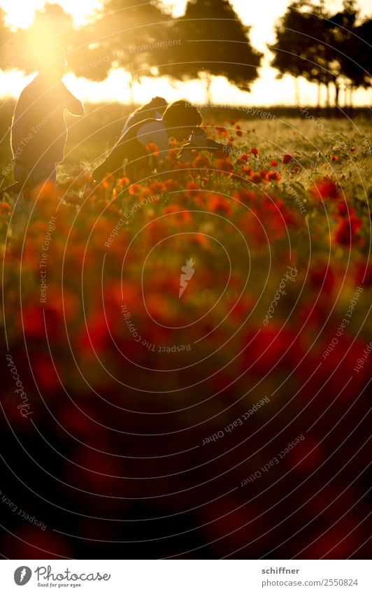 Mohntage könnten so schön sein... 3 Mensch Umwelt Natur Landschaft Pflanze Sonnenaufgang Sonnenuntergang Sonnenlicht Sommer Schönes Wetter Baum Wiese Feld gelb