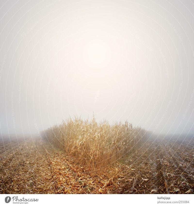 V Umwelt Natur Landschaft Pflanze Tier Urelemente Erde Luft Wasser Wassertropfen Himmel Horizont Herbst Klima Wetter schlechtes Wetter Nebel Sträucher Blatt