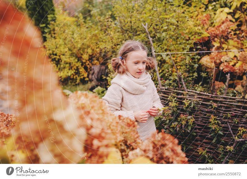 Kind Mädchen, das Ende Oktober oder November im Garten spazieren geht. Lifestyle Freude Ferien & Urlaub & Reisen Natur Herbst Wärme Blume Blatt Pullover Schal
